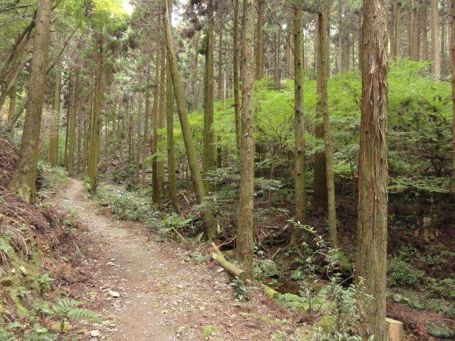 白嶽登山道1