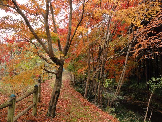 松原自然公園9