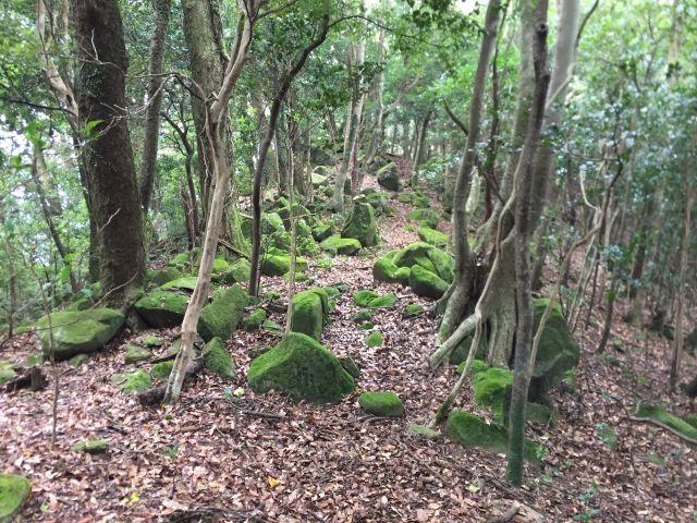 濃緑の登山道