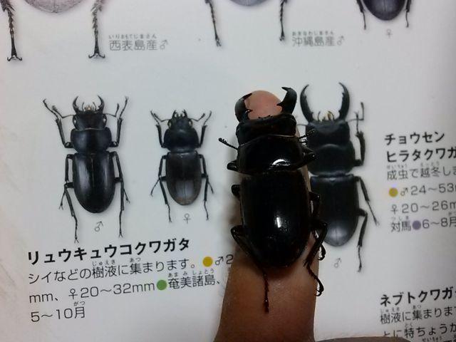 昆虫採集01